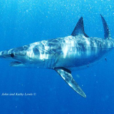 Shark-D40099-email
