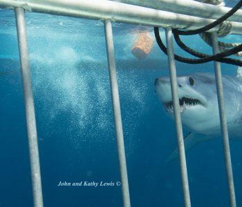 Shark-KAT4078mod1-email-copy
