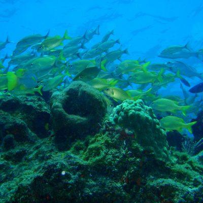 reefs3