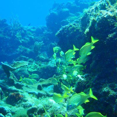 reefs4